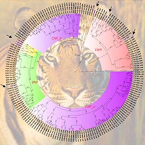 Bioinformatics and Geo-Spatial Analysis